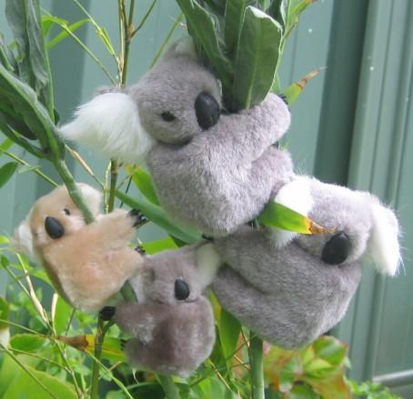 Clip On Koala