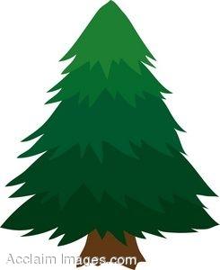 Evergreen Tree Clipart--16