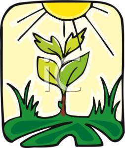 Photosynthesis Clipart