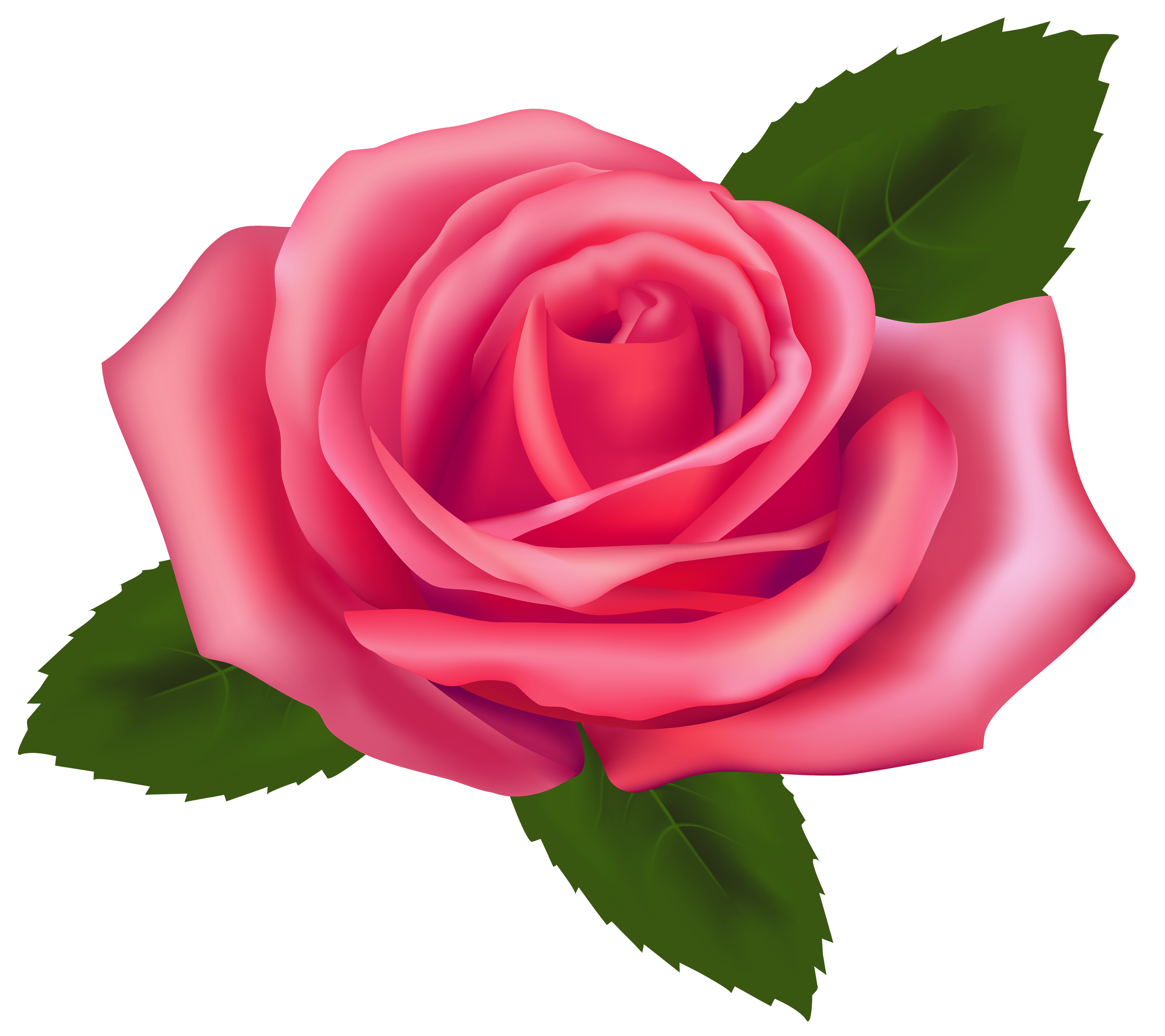 Rose Clipart--0
