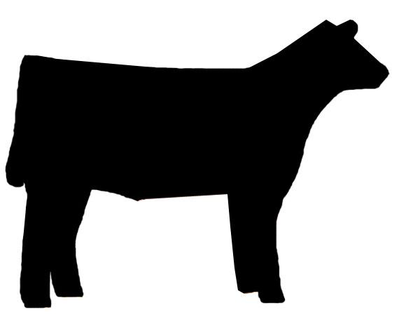 Show Steer Clip Art--0