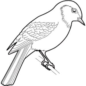 Sparrow Clipart
