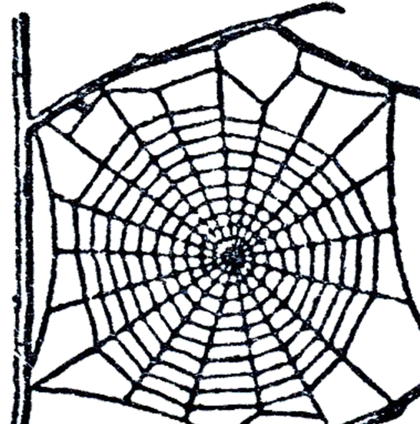 Spider Web Clip Art--0