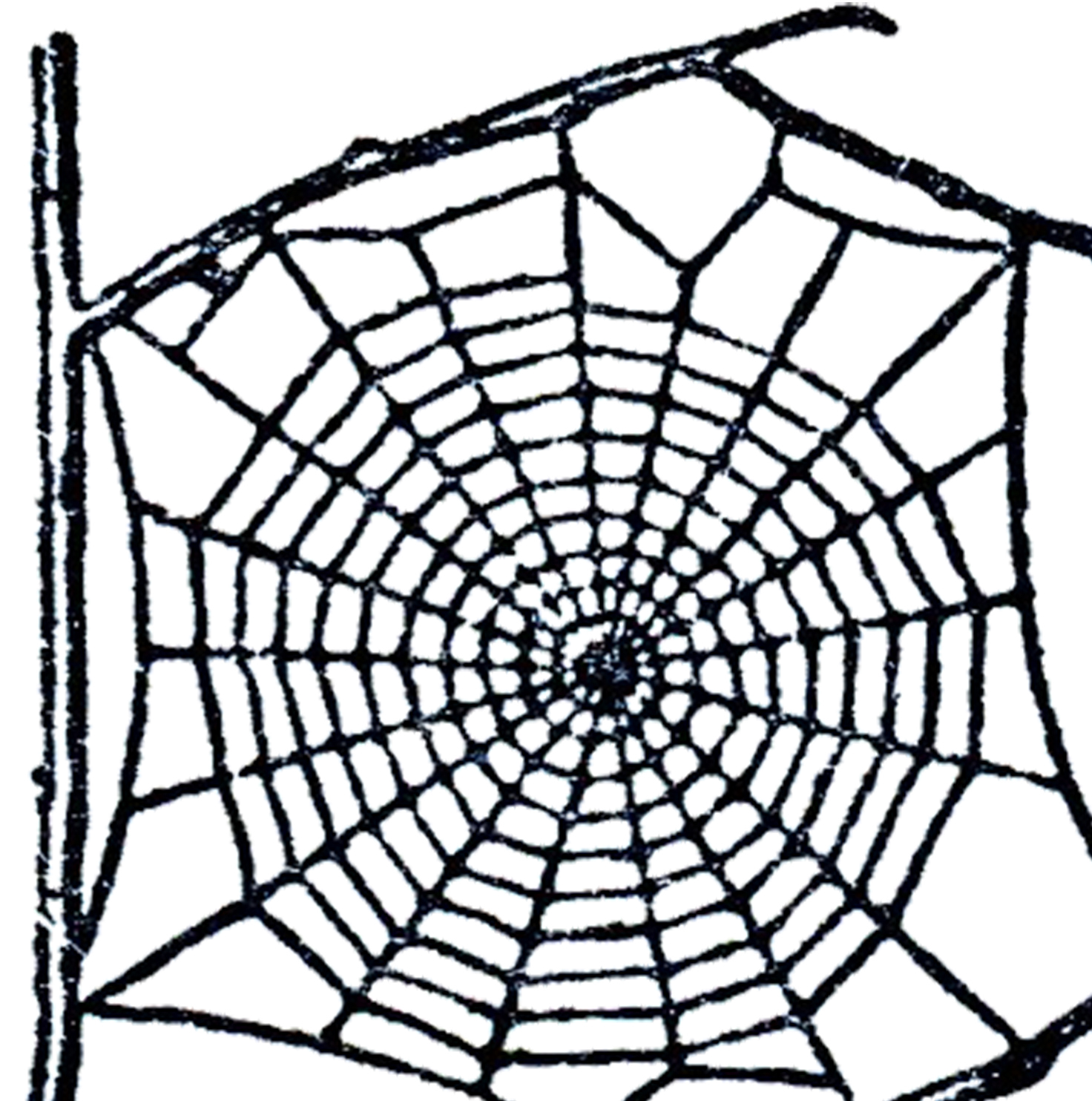 Spider Web Clipart--8