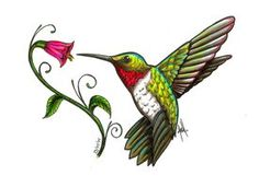 0 images about hummingbirds clipart