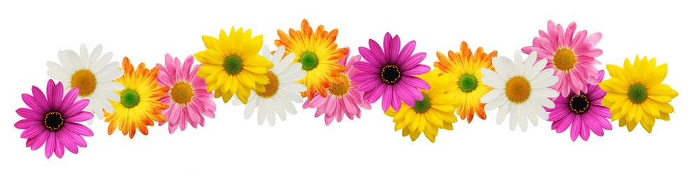 10 Spring Flowers Border Free Cliparts T-10 Spring Flowers Border Free Cliparts That You Can Download To You-16