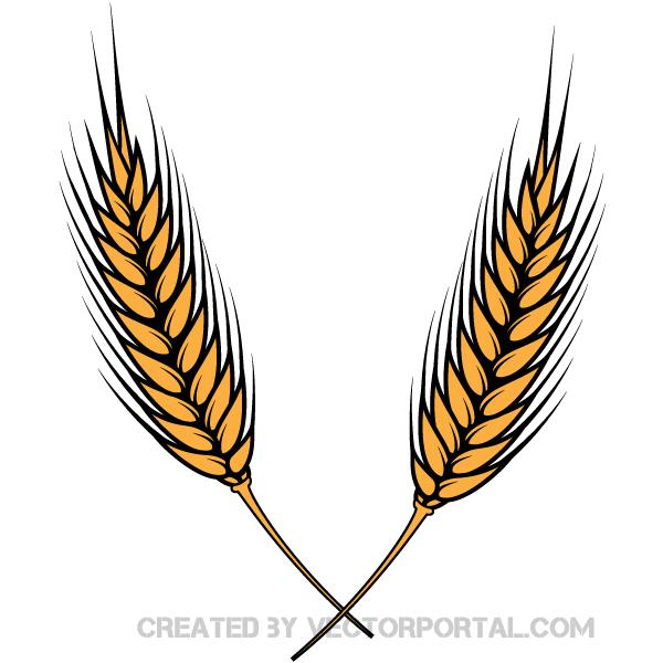 10  Wheat Clipart Images Vectors | Download Free Vector Art u0026amp; Graphics | 123Freevectors