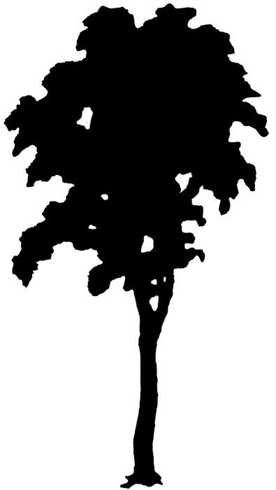 14 Trees Silhouette Free Cliparts That Y-14 Trees Silhouette Free Cliparts That You Can Download To You-0