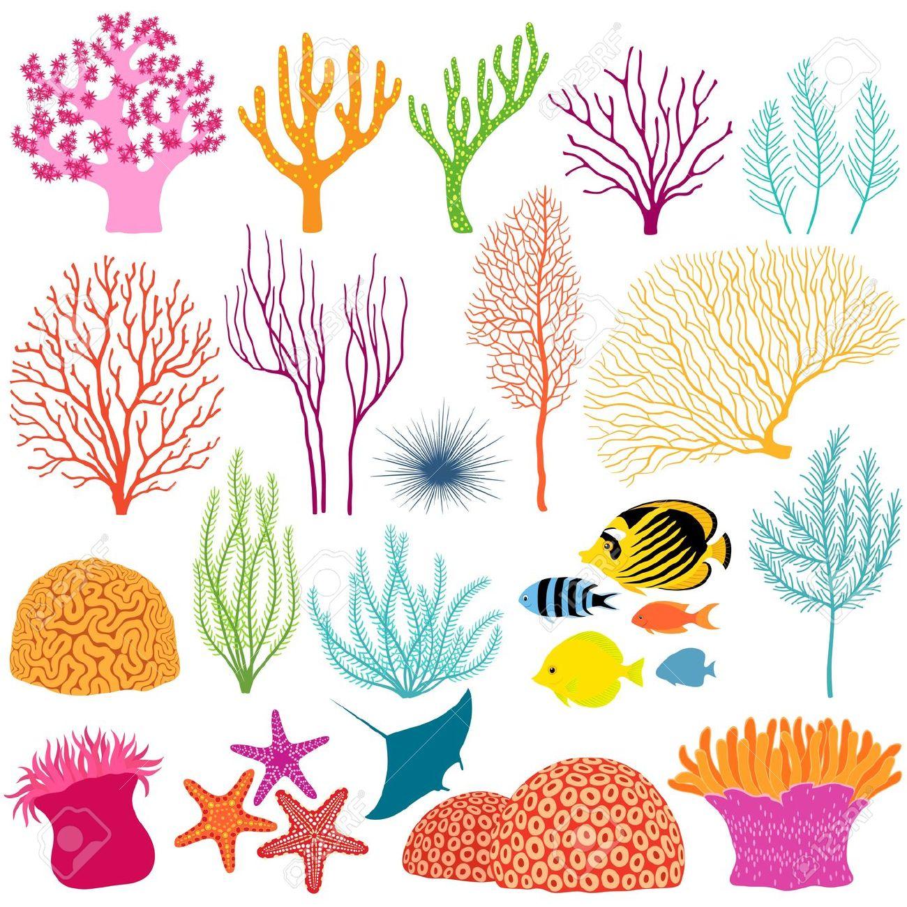Coral Clip Art