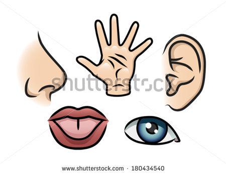 5 senses clipart