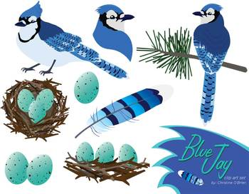 78  images about blue jay art on Pinterest | Birds, Clip art and Fine art