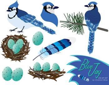 78  images about blue jay art on Pinterest | Birds, Clip art and Fine art