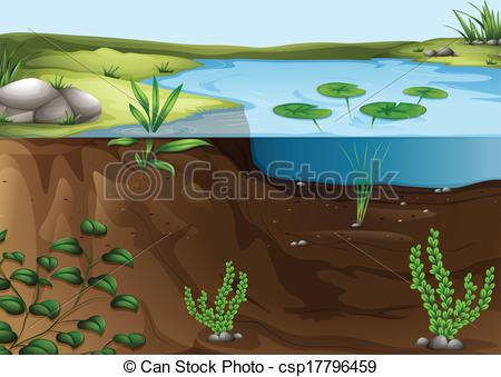 ... A pond ecosystem - Illustration of a pond ecosystem