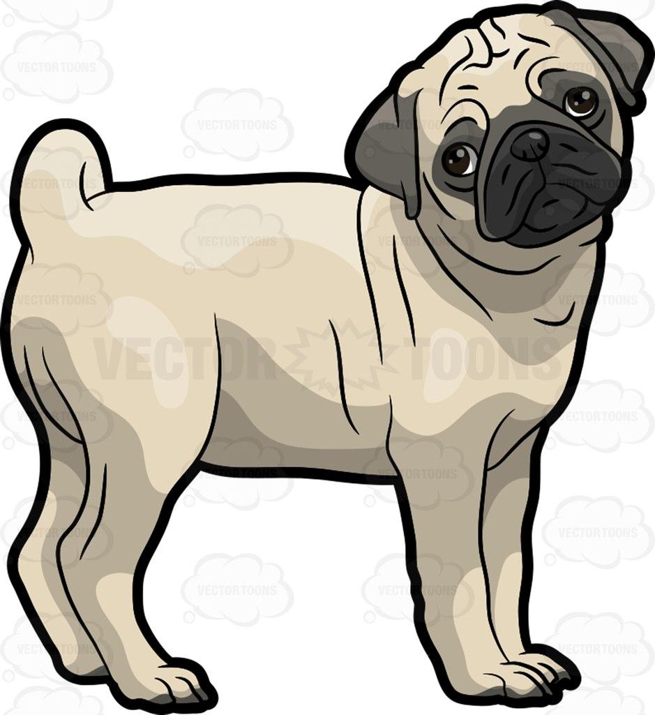 A sad Pug dog-A sad Pug dog-4