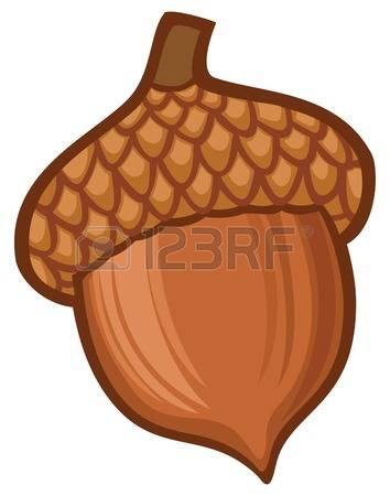 acorn illustration Illustration-acorn illustration Illustration-7
