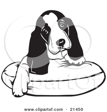 Adorable Basset Hound Puppy Dog With Long Ears Sitting On A Dog Bed And Tilting His Head Curiously by David Rey