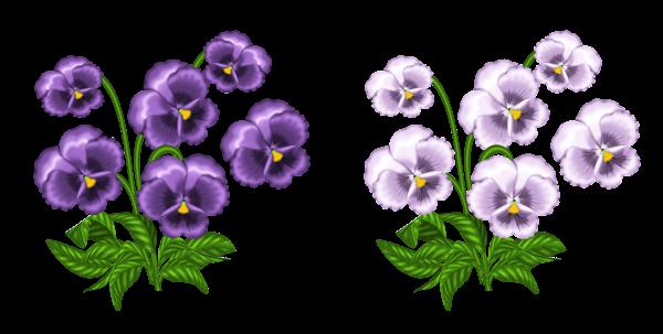 African Violet Clip Art