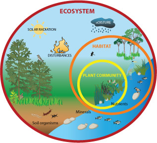 All About Ecosystems Easy Science For Kids A Diagram Of An Ecosystem