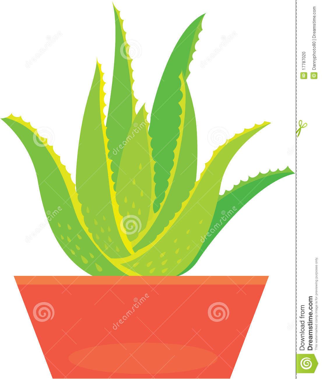 Aloe Clipart