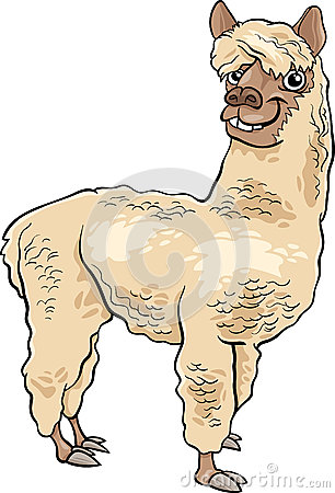 1000  images about Alpaca on