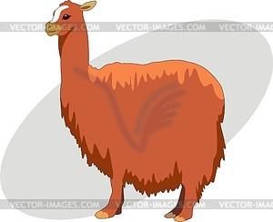 Alpaca - Vector Clipart-Alpaca - vector clipart-13