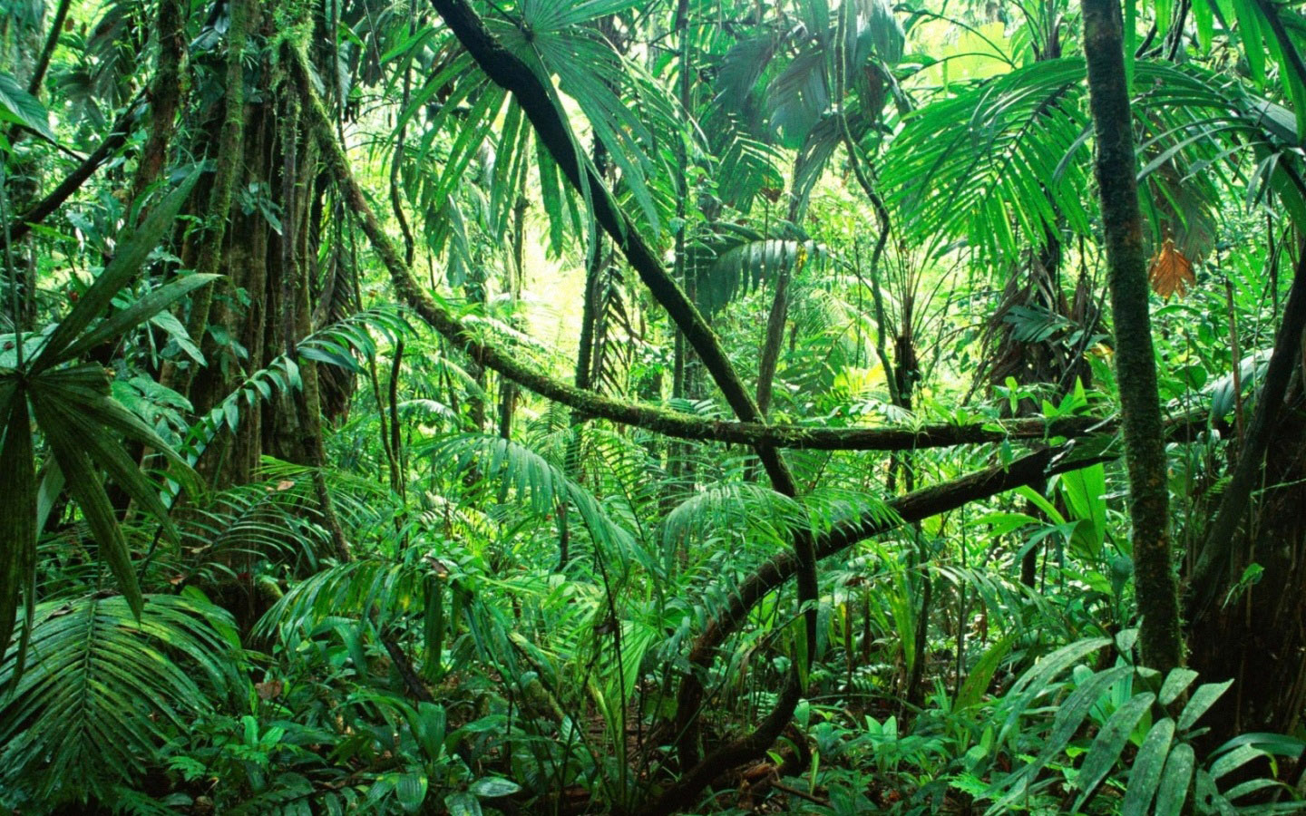 Amazon Forest-Amazon Forest-5