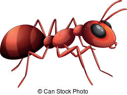 ... An ant - Illustration of an ant on a white background