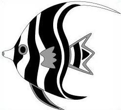Angel Fish-Angel Fish-5