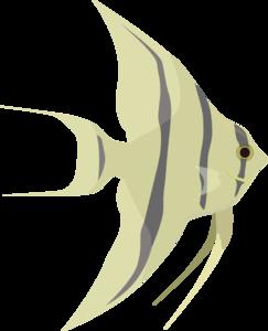 Angel Fish Clip Art-Angel Fish Clip Art-6