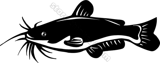 Animal Catfish Clipart u0026middot; «