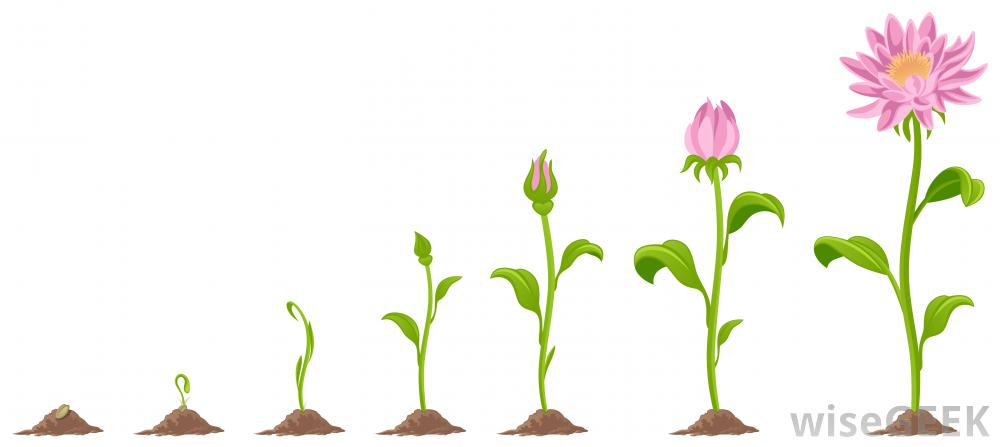 Grow Clipart