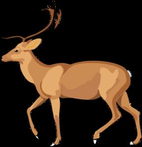 Antelope-Antelope-2