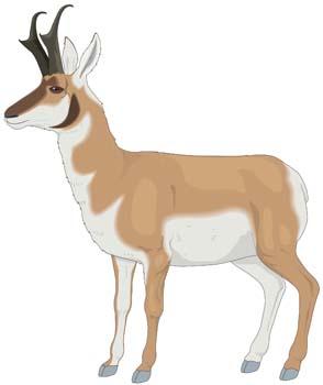 Antelope; Antelope Vector 1-Antelope; Antelope Vector 1-3