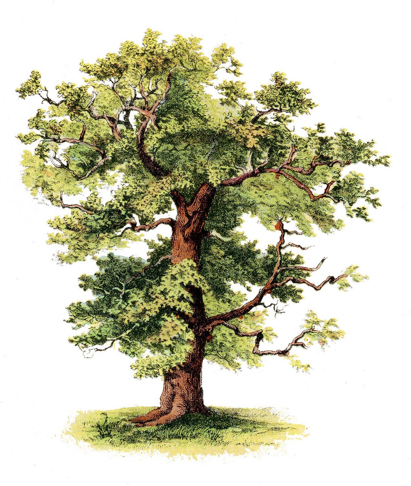 Antique Clip Art Beautiful Tree The Grap-Antique Clip Art Beautiful Tree The Graphics Fairy-3