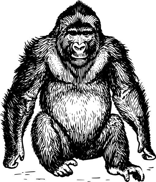 Ape Clip Art-Ape clip art-7