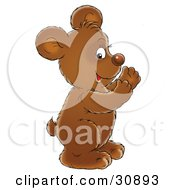 Clipart Illustration Of A Happy Brown Bear Cub Smiling And Clapping His Paws