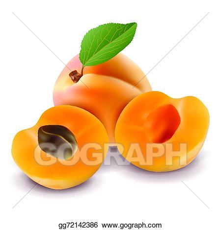 Apricot - Apricot Clipart