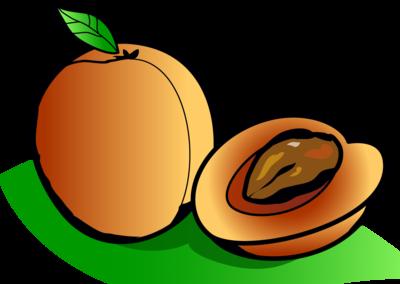 Apricot Clip Art - Apricot Clipart