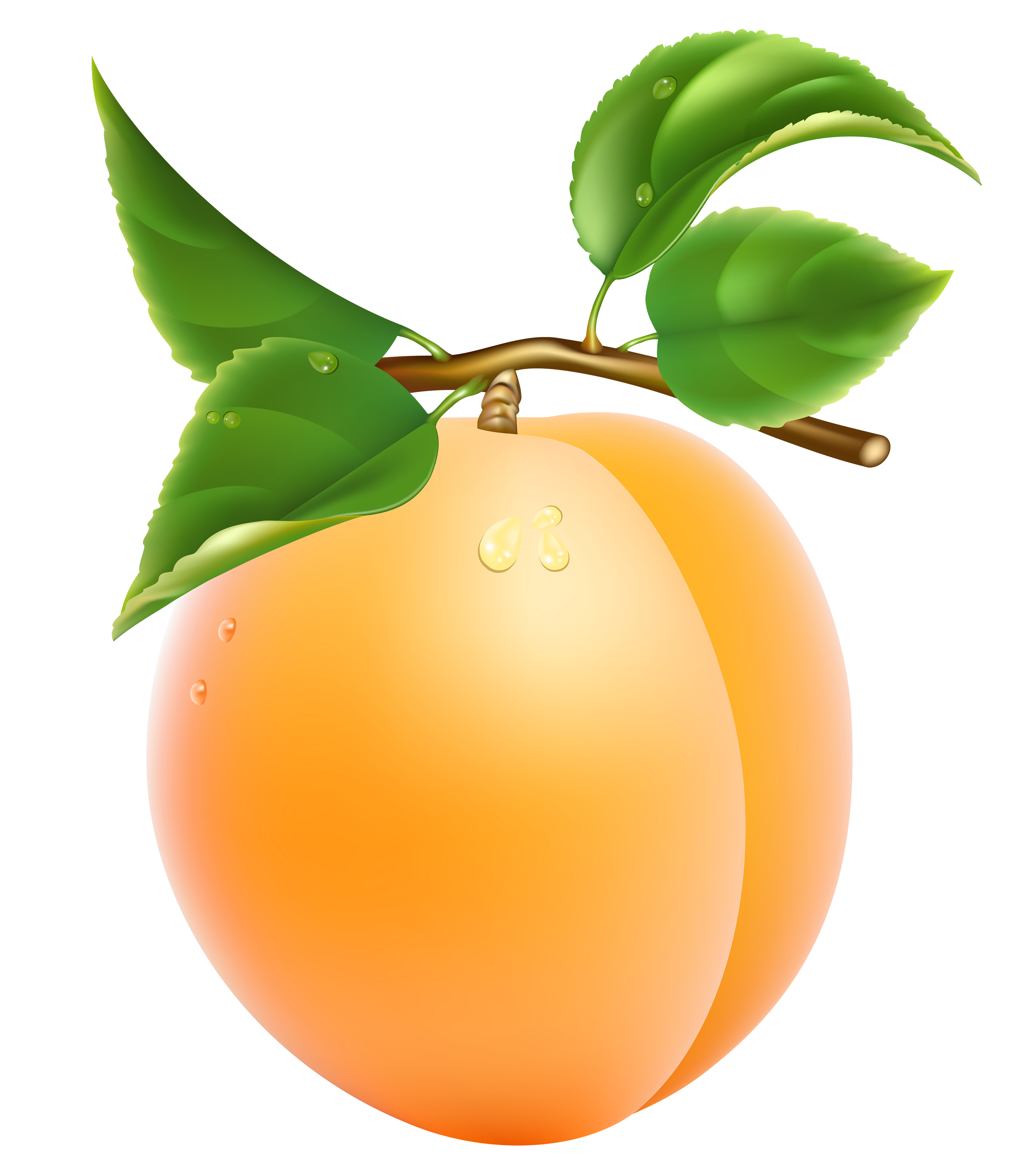Apricot Transparent Clipart #1