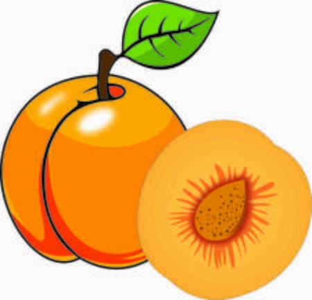 Apricot vector design Stock Photo