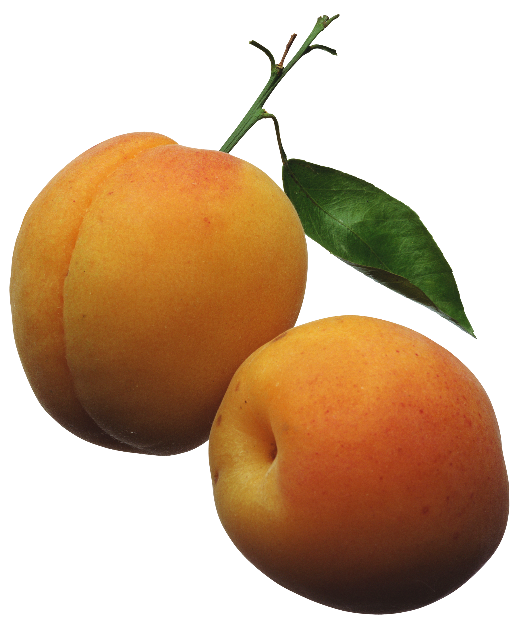Apricots PNG Clipart Picture - Apricot Clipart