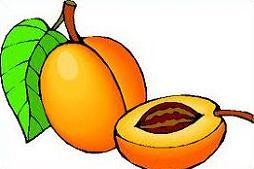 Free Apricot Clipart - Apricot Clipart