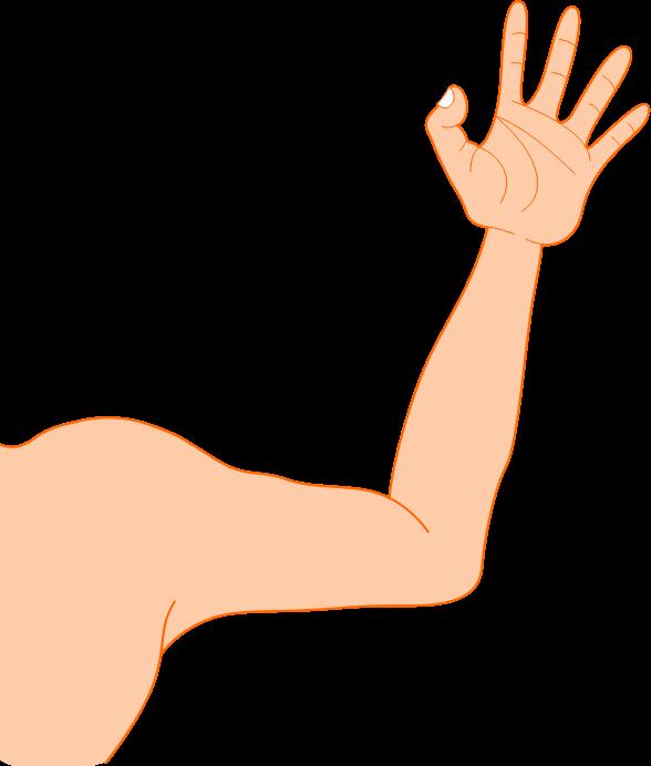 arm clipart