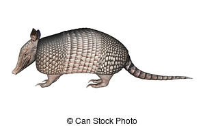 ... Armadillo - 3D digital render of a Armadillos, a New World... Armadillo Clipartby ...