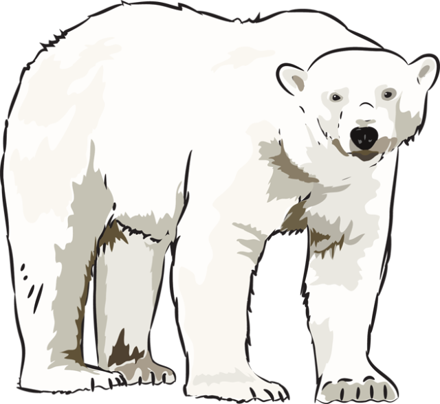 Art Polar Bear Clipart Kid-Art polar bear clipart kid-0