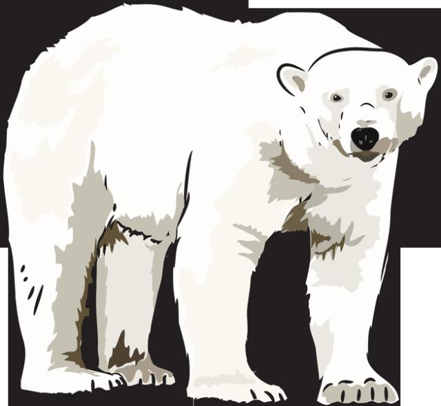 Art polar bear clipart kid