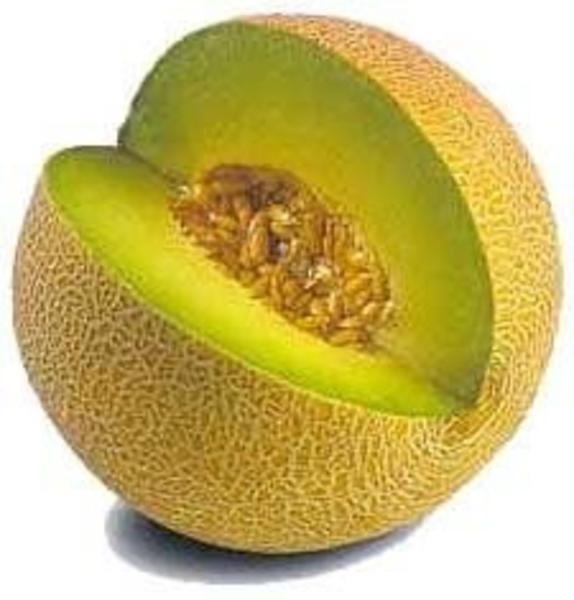 Melon Clipart