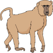 Baboon Clipart #1