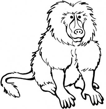 Baboon Clipart-Baboon Clipart-20