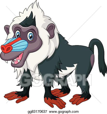 Cute baboon isolated-Cute baboon isolated-13
